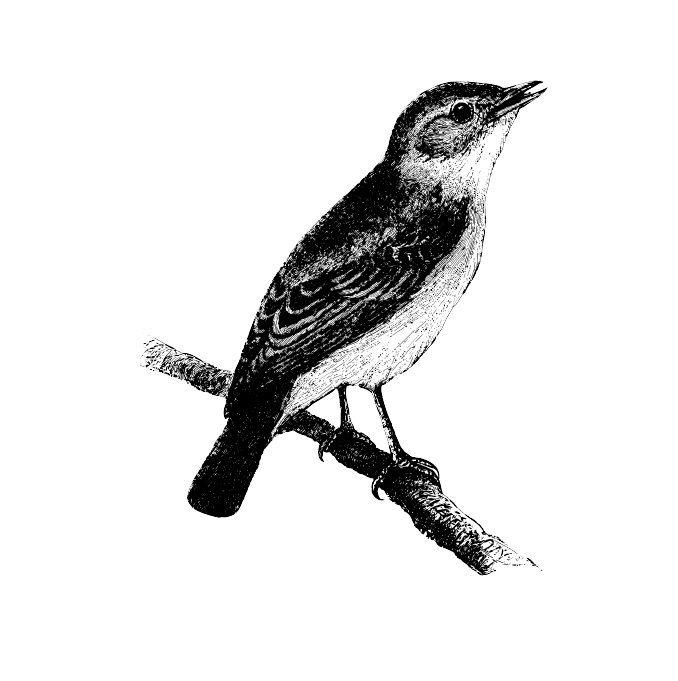A small bird, the size of the robin, with grey-black plumage and a red tail – hence its name. It enjoys living in urban areas and is fond of cliff-like buildings.