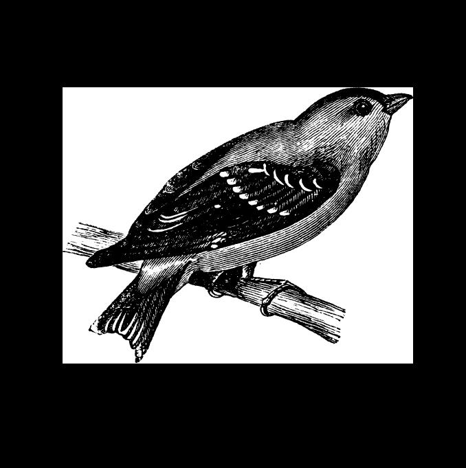 Deze zwierige vogel heeft een prachtig groen verenkleed met gele flitsen. Hij geniet van het stadsleven en is een groot fan van zwarte zonnebloempitten.