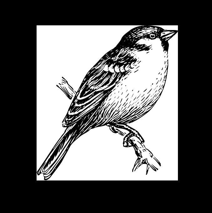 De koolmees is een regelmatige bezoeker van voedervrienden het hele jaar door, hij slaat noten en zaden op voor later. In de winter komen deze vogels samen om op voedsel te jagen.