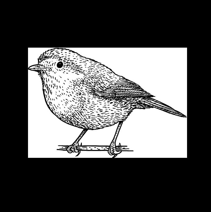 De favoriete vogel van iedereen. Regen of zonneschijn, deze zangvogel met rode borst zingt het hele jaar door: hij kan zelfs 's avonds kwekkend worden opgemerkt door de straatverlichting.
