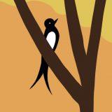 Een zwaluw die een ware luchtacrobaat is.