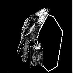 Slechtvalken nestelen zich in speciale kasten op het dak van Wonderwoods, weg van iedereen. Maar verborgen webcams geven ons een zeldzaam kijkje in het leven van 's werelds snelst vliegende vogel.