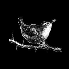 Een klein bruin vogeltje met een opvallend luide stem. Om in de winter warm te blijven, nestelt hij zich met ongeveer 10 andere winterkoninkjes in één nest.